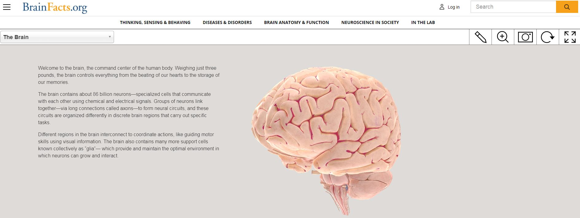 Neuroscience teaching and learning in schools | The British ...