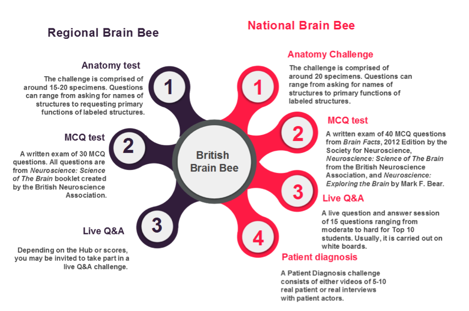 Bright Brains online | The British Neuroscience Association